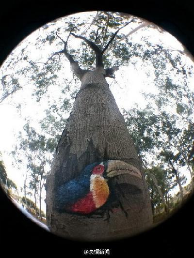 """萌萌哒的动物""""住""""进树洞-中国搜索图片频道"""