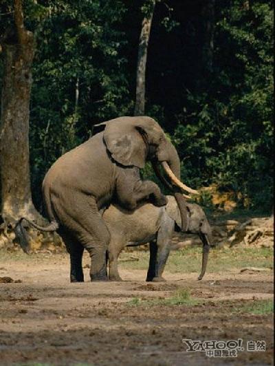 千奇百怪!那些动物界高难度的交配方式-中国搜索国际
